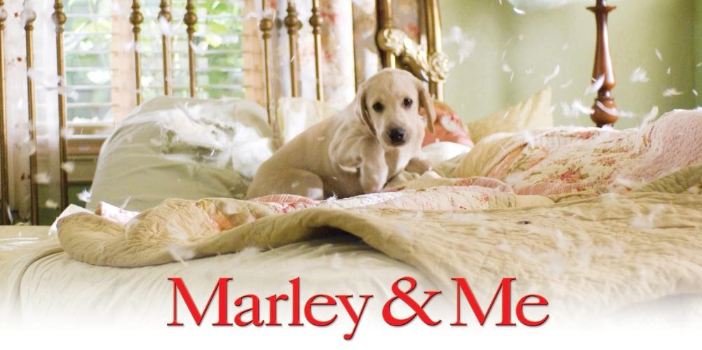 Depois do cinema, «Marley & Me» continua na televisão